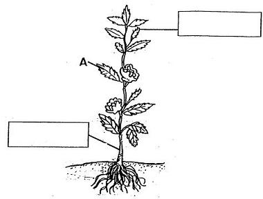 Psle exam simulation test engine a label the plant parts by writing the names in the boxes b part a is important to the plant because it contains ccuart Gallery